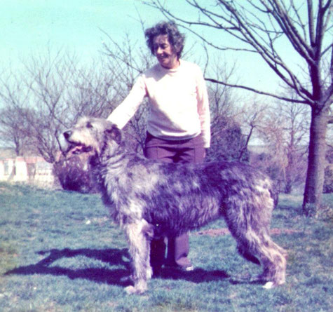 The Erindale Hounds - Irishwolfhound-Kennel