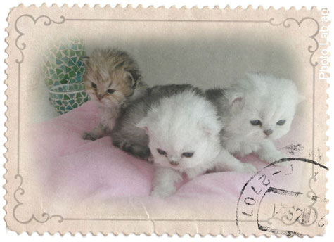 Amelie,  Alisha  und Amira