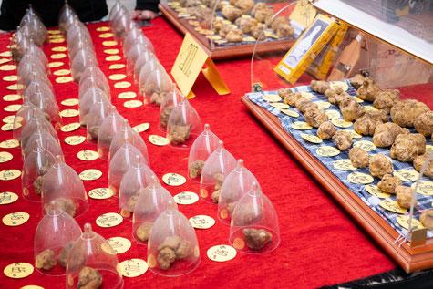 Trüffelsaison in Italien Alba mit vielen Trüffelmärkten und Festivals