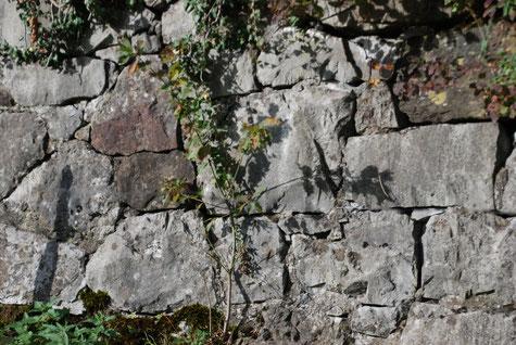 Trockenmauer auf der Ostseite des Burghügels