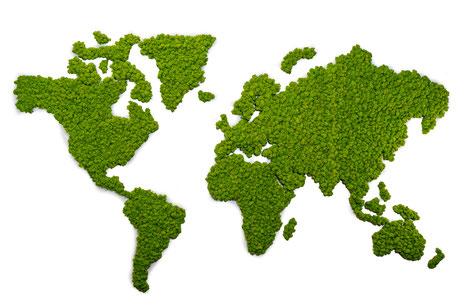 München, Start up nachhaltig, Wandbegrünung, Innenraum, Büro