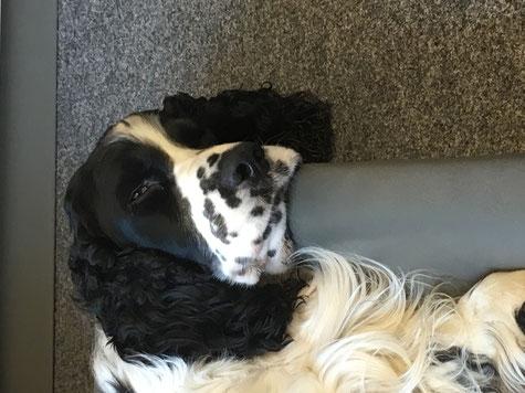 Bürohund ist ganz schön anstrengend! Fotos: Svenja Hansen