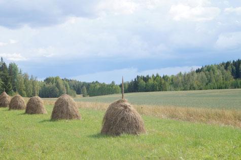 Traditionelle Landwirtschaft, Foto: Ulf F. Baumann