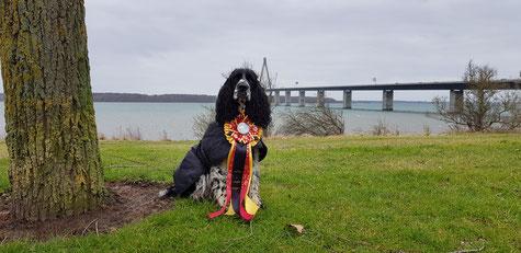 """""""Jolanthe vom Belauer See"""" gewinnt in Dänemark RO Turnier, Foto: Svenja Arendt"""