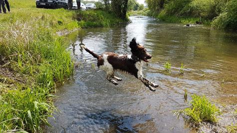 """...und wieder einer """"vom Belauer See"""", der Wasser toll findet, Foto: von Schwerin"""