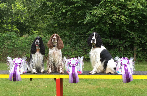 "1., 2. and 3. Place went to Kennel ""vom Belauer See"" at RO Contest, Photos: Svenja Hansen"