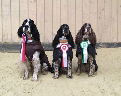 Jeppe, Zelda and Jule at the last RO Trial this year, Photo: Svenja Hansen