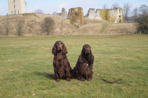 """""""Sandscape Golden Girl At Belauer See"""" and """"Winterbourne Move On To Belauer See"""" in the country of origin of the Field Spaniels, Photo: Ulf F. Baumann"""