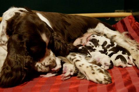 Ilse mit ihren Welpen kurz nach der Geburt, Fotos: Ulf F. Baumann