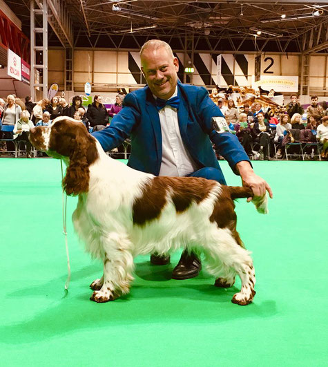 """Art-Wave's Cash In Hand"" Crufts 2019, Foto: Eva-Marie Bergstrand"