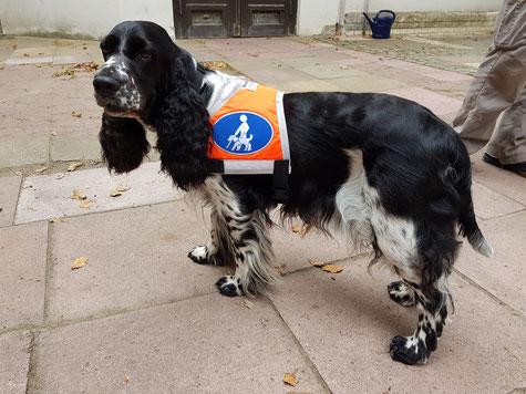 Auch Filmhunde müssen in die Maske und bekommen ein Kostüm... Foto: Svenja Arendt