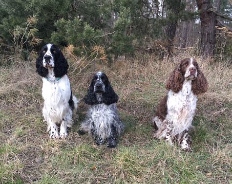 Jeppe, Festus und Jule, Foto: Svenja Hansen