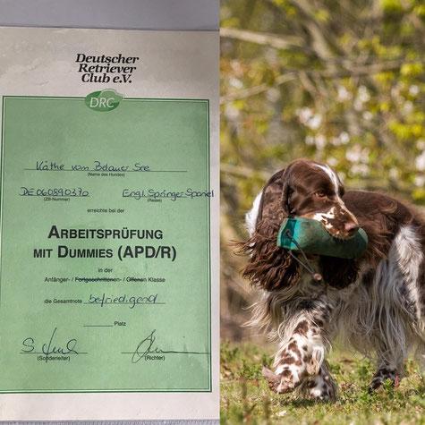 Käthe war erfolgreich auf der Dummy A! Foto: K. Vogt