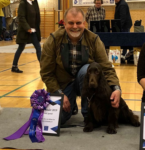 Spaniel of the year 2019 in Denmark! Photos: Eva-Marie Bergstrand
