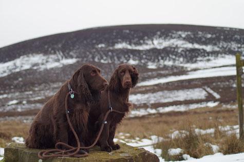 Vicky und Dorothy in den North York Moors, Foto: Ulf F. Baumann