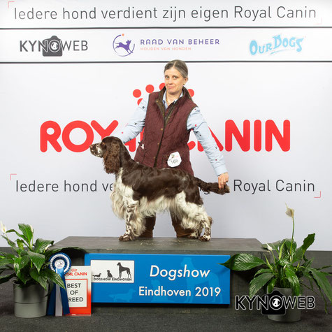 """Ludwing vom Belauer See"" Best of Breed in Eindhoven, Poto: Kynoweb/Karrasch"