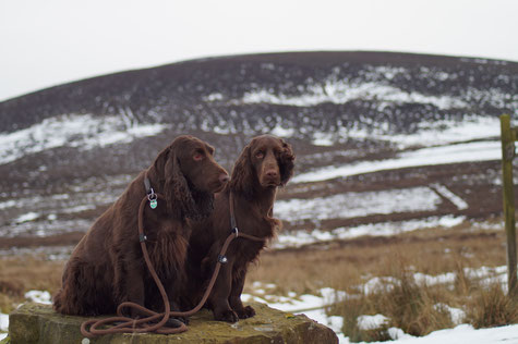 Vicky and Dorothy in the North York Moors, Photo: Ulf F. Baumann