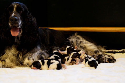 Yola and her seven dwarfs, Photo: Ulf F. Baumann