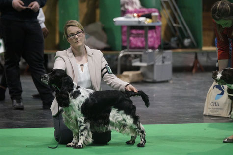 """Jolanthe vom Belauer See"" at Crufts 2020, Photo: Ulf F. Baumann"
