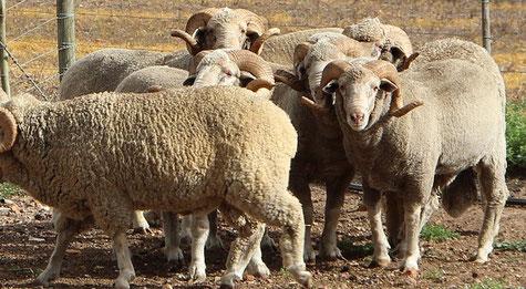 couleur naturelle, teinture textile, laine, soie, magasin de laine, développement durable, mérinos, laine locale