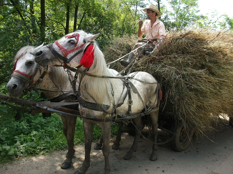 Romanian Villager