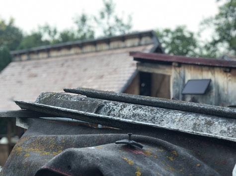Asbestschein TRGS 519 Online - Welcher Asbestschein ist der richtige? Asbest Lehrgang