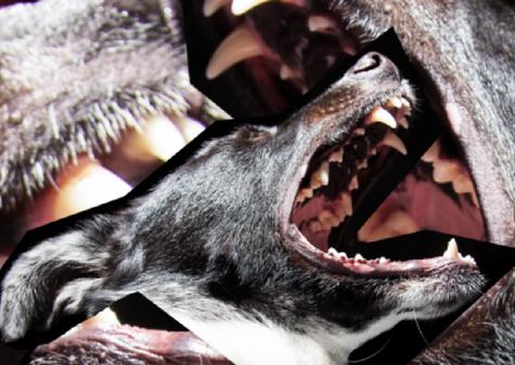 Kläffende Hunde