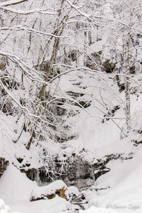 Campigna: nevicata di fine febbraio 2018
