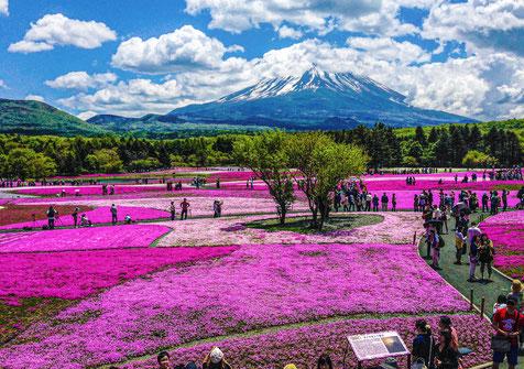 Mt Fuji & Cherry Moss - Hire Car in Japan