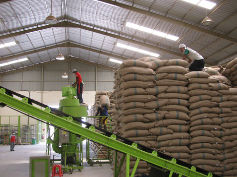 Coffee factory in a conventional supply chain