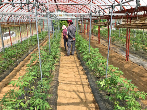三宅サンマルツァーノ 菊地農園
