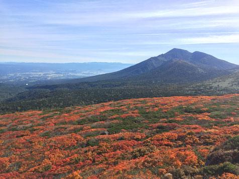 朝8時30分頃。三ツ石山頂からの紅葉の絨毯と岩手山。山頂からならではの景色です!
