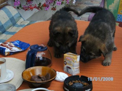 Leo und Luzi beim Kaffe trinken