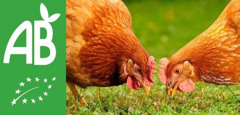 poules bio breizh on egg