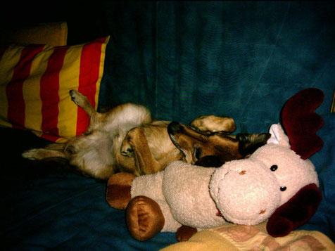 ich + dicker Elch power-relaxing