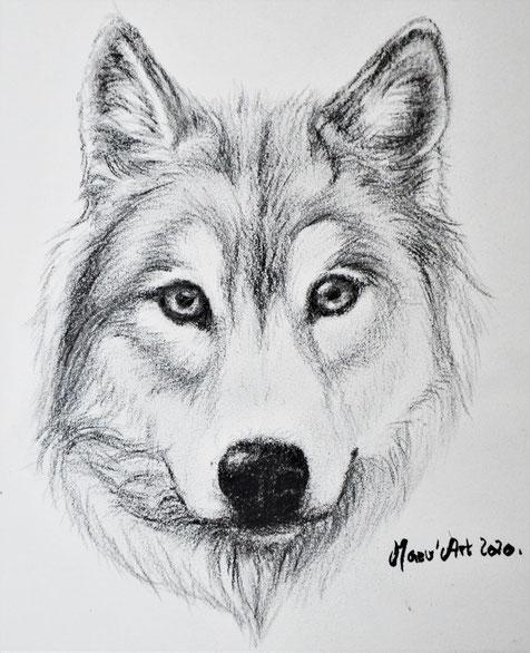 Dessin de loup au crayon gris