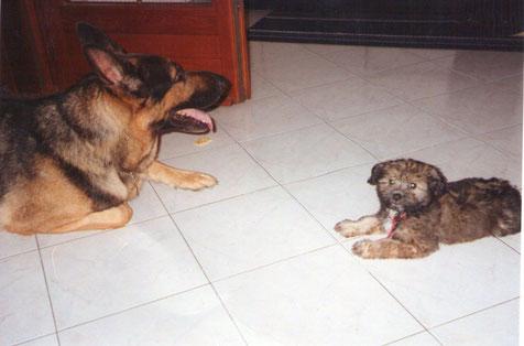 Il mitico Doc e Zara a 3 mesi