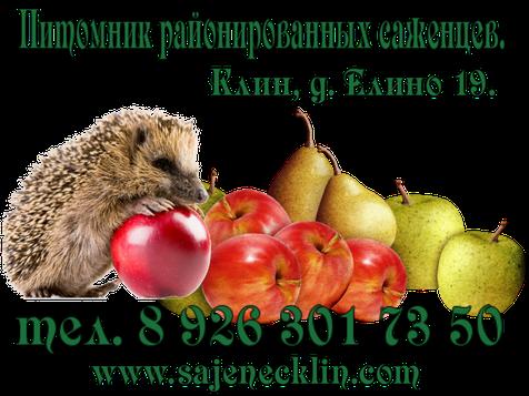 Заказать и купить в Клину районированные саженцы плодовых деревьев,кустарников,рассаду, а также получить подробные консультации по их выращиванию и ухаживанию за ними вам помогут в нашем питомнике в деревне Елино. www.sajenecklin.com