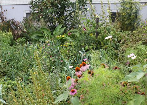 Mein kleiner Kräutergarten mit über 100 Heilpflanzen