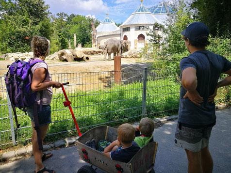 Praktisch ist es, wenn man im Tierpark ein Leiterwagerl mit dabei hat!