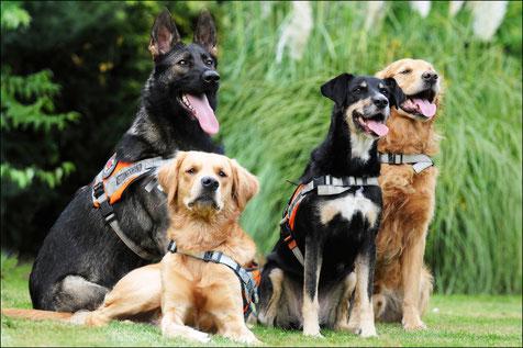 Hunde retten Menschen