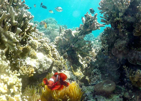 Snorkeling in Kanawa Island