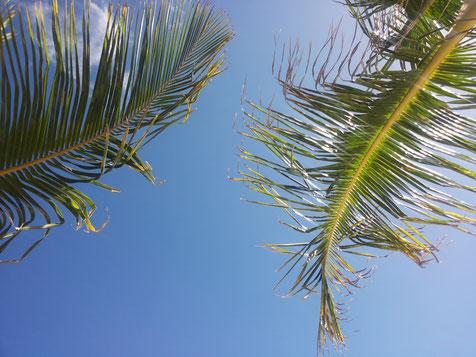 Palme Himmel blau