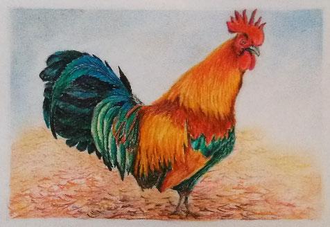 Pastellkreide - Tiermalerei - Geflügel - Malen