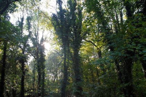 Verwunschener Park auf Gut Büssen