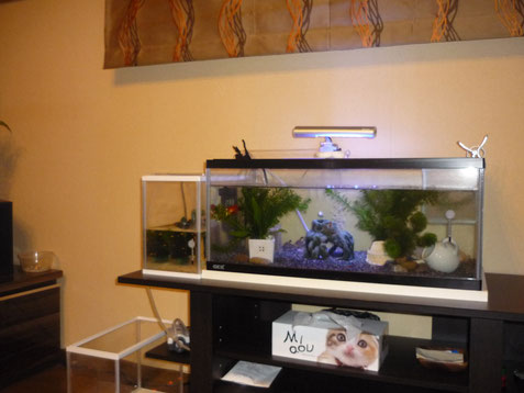 水槽のある部屋 熱帯魚
