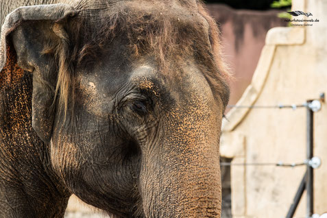 Elefant im Zoo Hannover