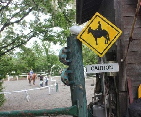 乗馬クラブへ往診の様子