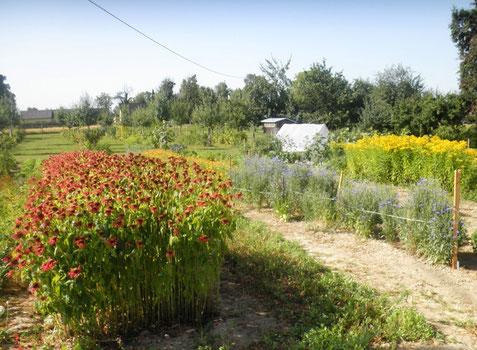Unser Feld im Sommer