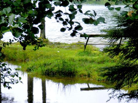 La Vologne rejoint le lac...